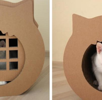 Miejsce dla kota