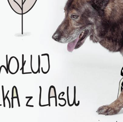 Pieskie życie – kalendarz na 2015 rok