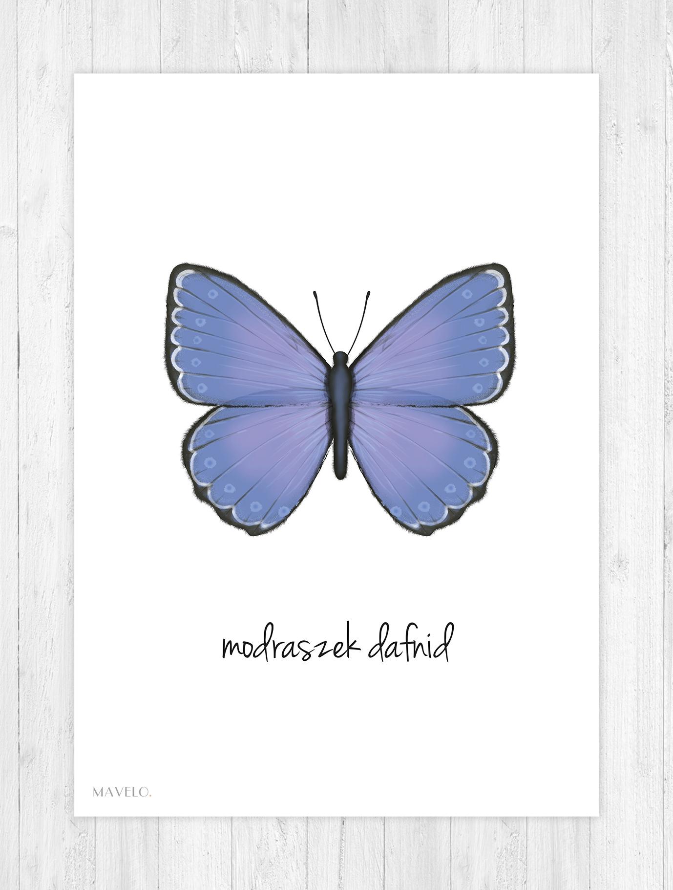 plakat z motylkiem