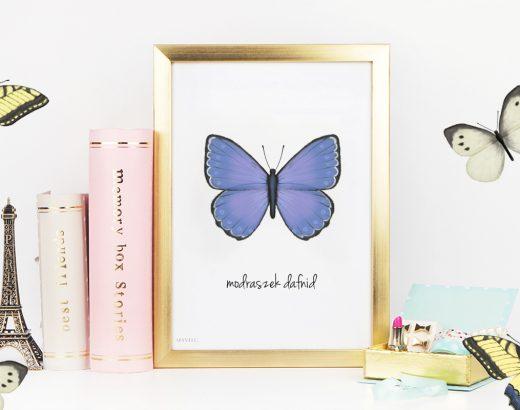 Plakaty z motylkami do wydruku (3 wzory)
