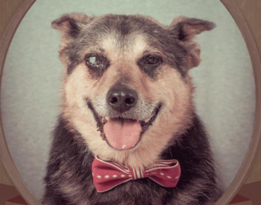 Kalendarz 2014 z bezdomnymi psami