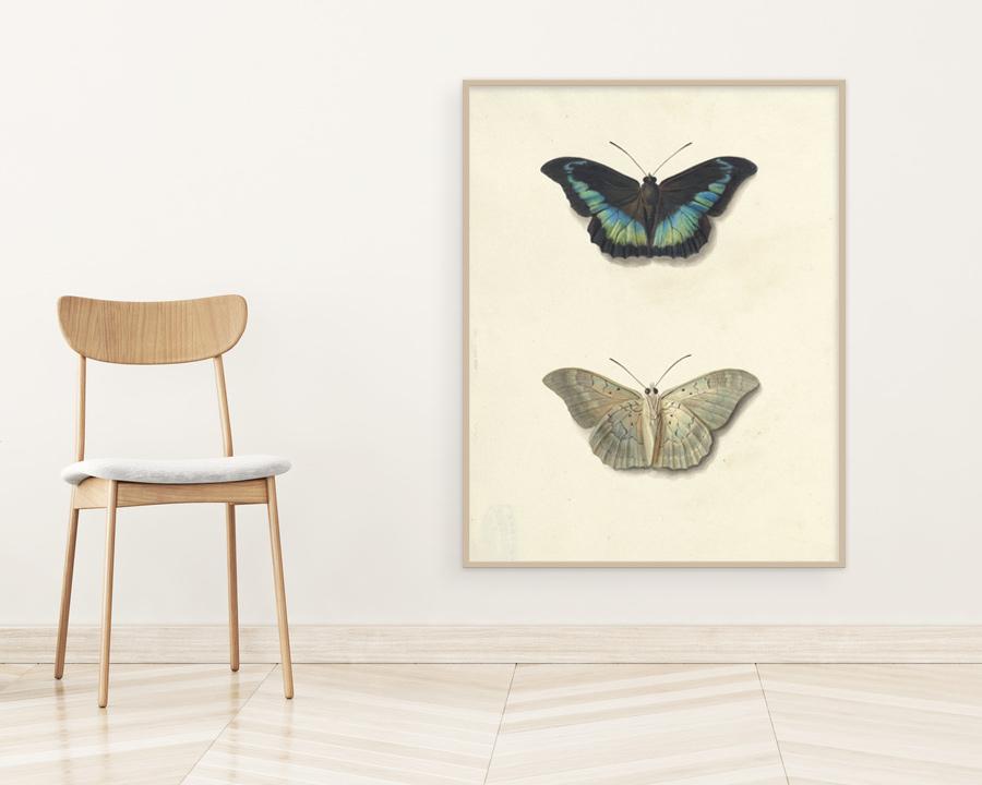 retro plakaty z owadami