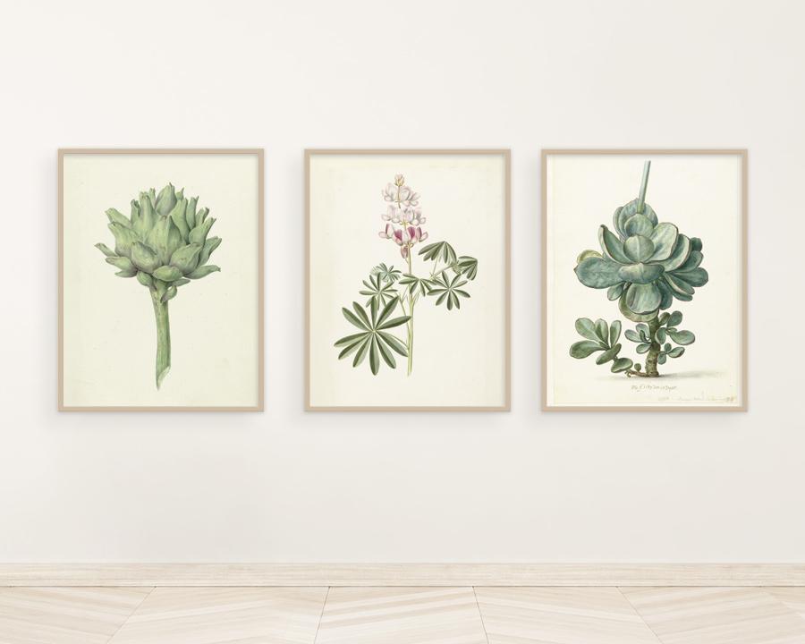retro plakaty botaniczne