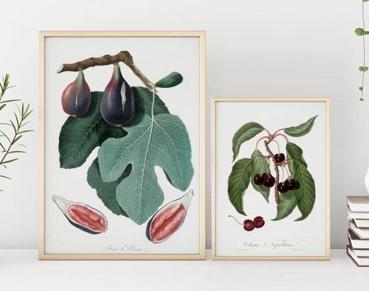 Retro ilustracje do druku: zwierzęta, owoce, kwiaty i wiele innych. Imponujące zasoby nowojorskiej biblioteki!