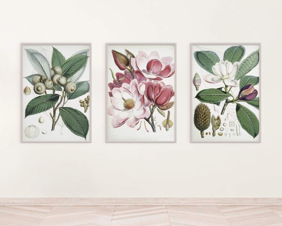 Retro Ilustracje Do Druku Zwierzęta Owoce Kwiaty I Wiele